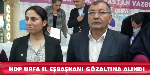 HDP Urfa İl Eş Başkanı Sürücü gözaltına alındı