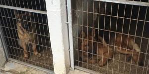 Çiftlikte yasa dışı yollardan gelen 56 hayvan bulundu